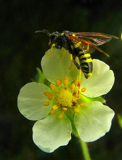 Flor con visitante